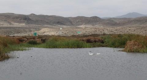 Avanza proceso declarar Santuario Naturaleza Humedal Caleta Totoral, Chile