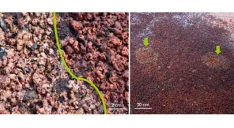 ecosistemas antárticos, riesgo ataques hongos asociados al cambio climático