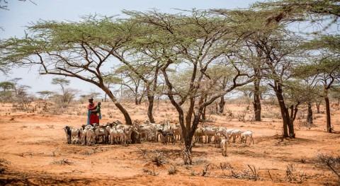cambio climático arrastra millones personas inseguridad alimentaria y pobreza