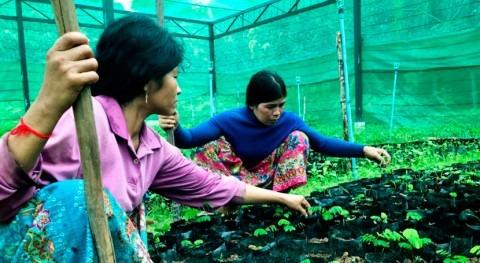 proyecto ONU Medio Ambiente alivia dependencia lluvia agricultura Camboya