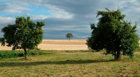 Gobierno Murcia destina 48 millones poner más agua disposición agricultores