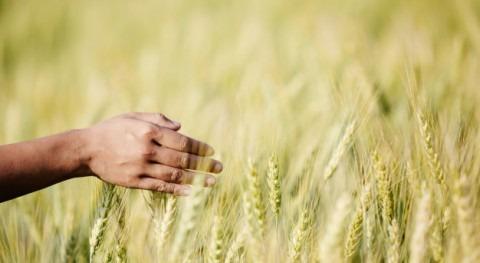 Incatema Consulting & Engineering continúa desarrollo Agricultura Comercial Angola