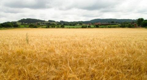 cambio climático, culpable deficiencia selenio cereales