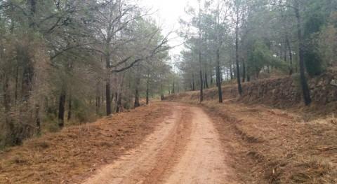 Confederación Júcar realiza tratamientos selvícolas entorno embalse Arenós