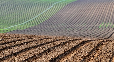 Ampliado plazo solicitar ayudas titulares explotaciones agrarias afectadas sequía