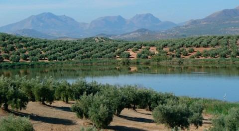 ¿Cómo afecta temperatura suelo absorción agua olivos y almendros?
