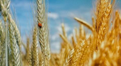 aumento temperatura amenaza producción agrícola mundial