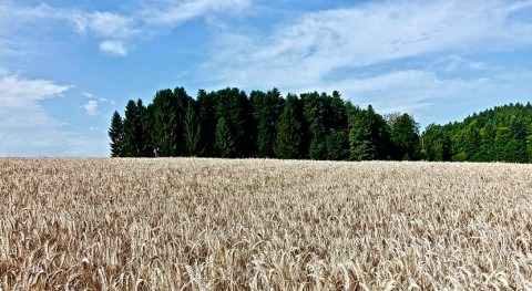 cambio climático podría aumentar tierra cultivable 44% final siglo