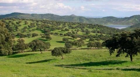 bosque mediterráneo está seriamente afectado cambio climático y sequía