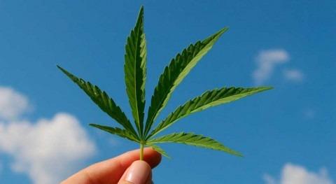 California actualiza política cultivo cannabis proteger cauces fluviales