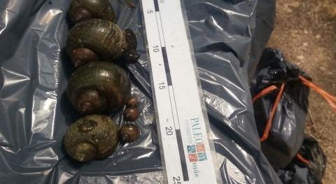 Buzos GEAS Guardia Civil colaboran retirada caracol manzana Miravet