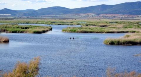 exceso carpas Tablas Daimiel incide descenso aves acuáticas