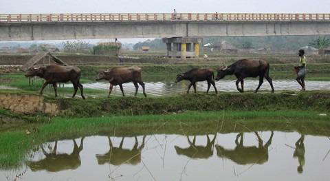 mayor delta fluvial planeta, situado Bangladesh, punto partirse