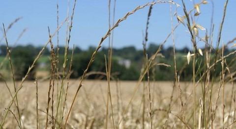 Desarrollan herramientas precisión manejo sostenible control mala hierba herbicidas