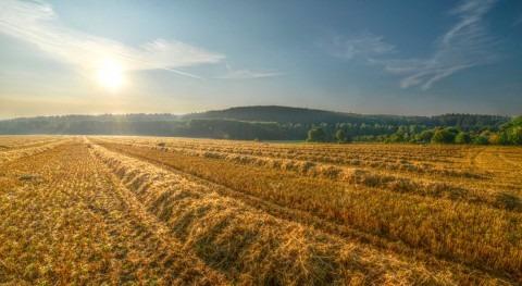 sequías y heladas dañan 30 y 70% cultivos cereales Valladolid