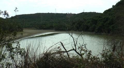 Urgen medidas especies invasoras Charca María Moya Cádiz