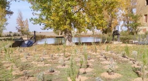 CHD realizará 4.000 nuevas plantaciones Canal Castilla mejorar valor ambiental