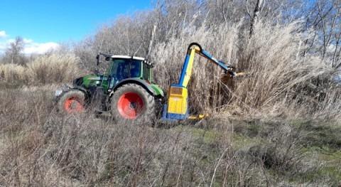 Ebro Resilience inicia eliminación especies flora invasora tramo medio Ebro