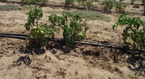 elevado potencial agrícola zona norte Chile peligra contaminación y escasez recursos hídricos