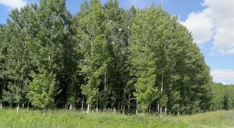 CHD aprueba plan aprovechamiento maderable masas arbolado año 2018