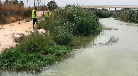 CHS limpia residuos flotantes desembocadura río Segura Guardamar
