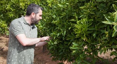 cambio climático pone riesgo viabilidad comercial cítricos, vid y olivo
