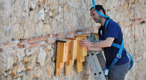 Fundación Aguas Valencia protege población murciélagos río Turia