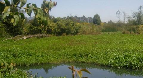 Humedales urbanos, clave sostenibilidad ambiental