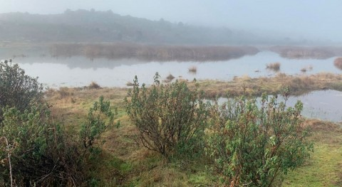 Madrid invertirá 11 millones euros preservar valor natural humedales