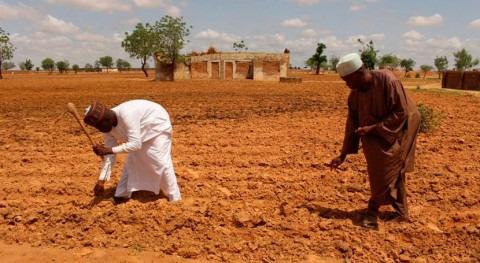 impactos climáticos y conflictos lastran seguridad alimentaria