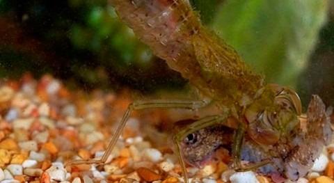 contaminación química agua amenaza poblaciones anfibios