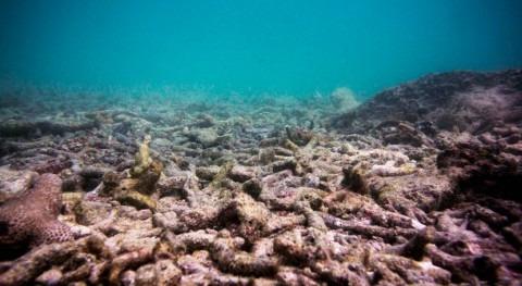 cambio climático causará blanqueamiento coralino anual