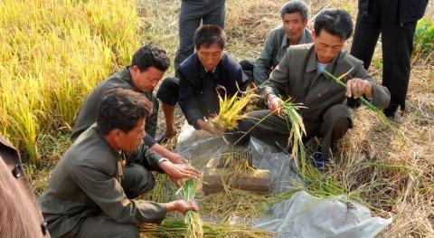 producción alimentaria Corea Norte sucumbe peor sequía 2001