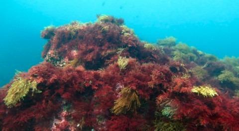 9 14 estuarios y 4 aguas costeras CAPV han alcanzado buen estado ecológico