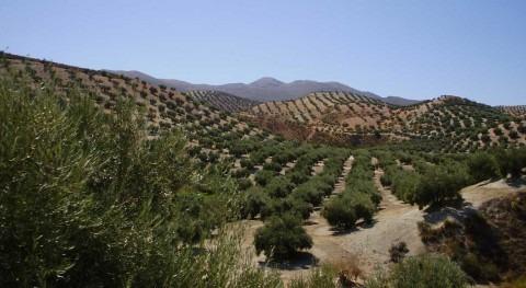 proyecto Reutivar encuentra nuevas fuentes agua riego olivar