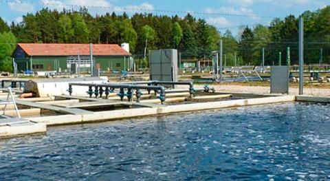 criadero peces logra óptimas condiciones agua bombas Flygt