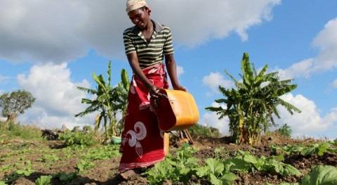 Crisis climáticas y hambre África austral: organismos alimentarios piden más apoyo