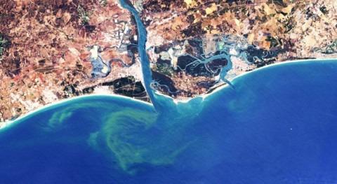 CSIC desarrolla metodología detectar y monitorizar floraciones algas nocivas