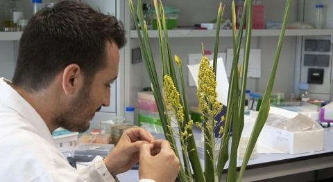 mecanismos plantas sequía, claves desarrollar cultivos más resistentes