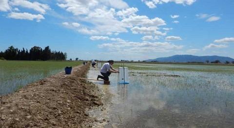 cultivo arroz Delta Ebro emite 10.500 toneladas metano anuales