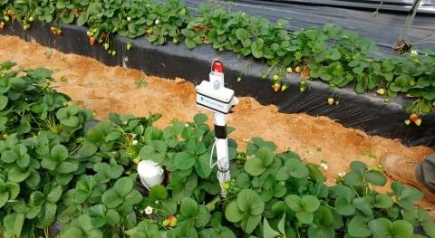 Ferdoñana contribuye al ahorro agua cultivo frutos rojos uso tecnologías