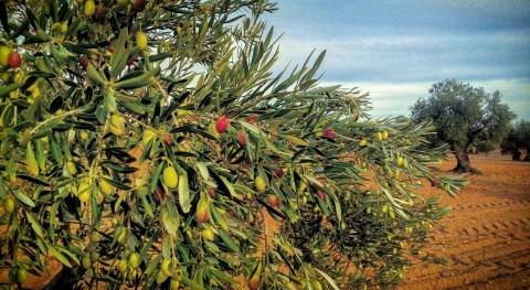 Riego localizado goteo cultivos leñosos