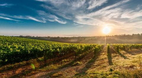 cambio climático ya afecta producción alimentos