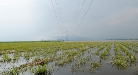 ¿Podemos crear cultivos resistentes inundaciones?