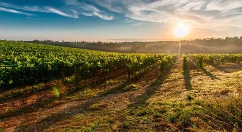 Lo cultivos bioenergéticos podrían ser tan nocivos como calentamiento global
