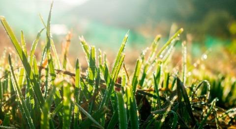 2040 patrones lluvias habrán cambiado drásticamente y afectarán cultivos clave