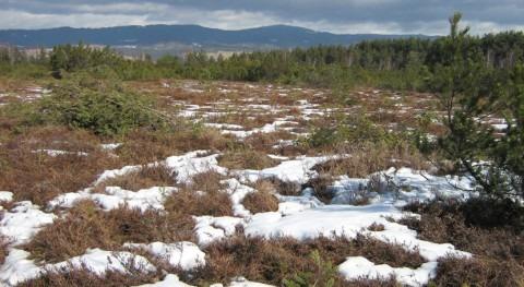 Polonia designa tres sitios Ramsar nuevos