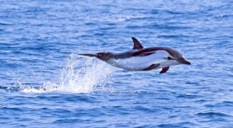 poblaciones europeas cetáceos, amenzadas altas concetraciones PCB