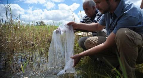 Niño guarda relación epidemia dengue Sri Lanka