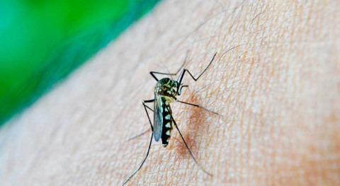 periodos sequía prolongada promueven aparición dengue
